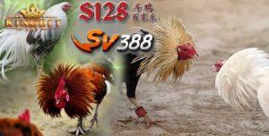 Daftar S128