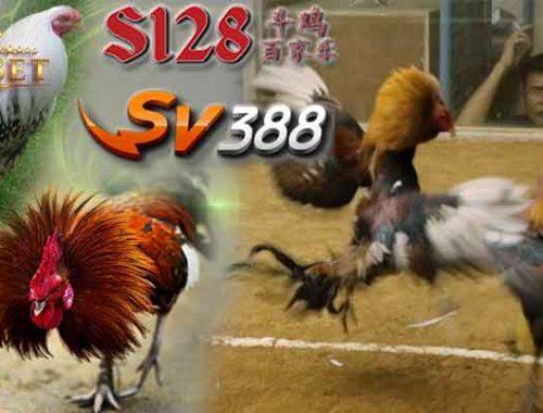 S1288 Adu Ayam