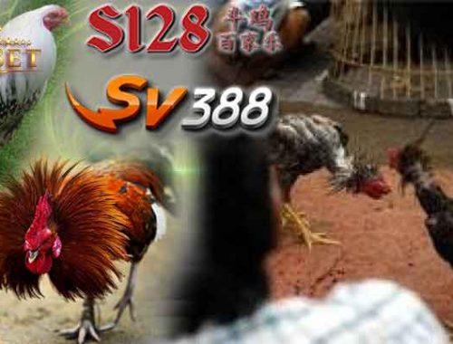 Agen Sabung Ayam S1288